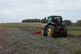 Figure 1. Hairy vetch-triticale cover crop being rolled