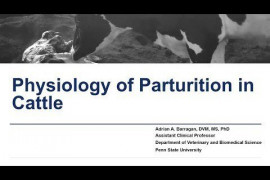 Maternity Management Practices in Dairy Farms: Physiology of Parturition in Cattle