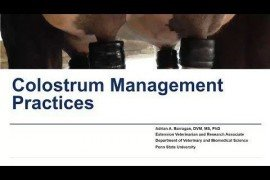 Maternity Management Practices in Dairy Farms: Colostrum Management Practices