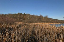 Over 13% of Pennsylvania's wetlands are permanently flooded by water, like this lake in Westmoreland County, PA (Photo by D. Rhea, Penn State)
