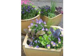 Spring containers with a mix of flowers, herbs and vegetables