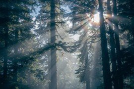 Forest Economic Data: Dauphin County
