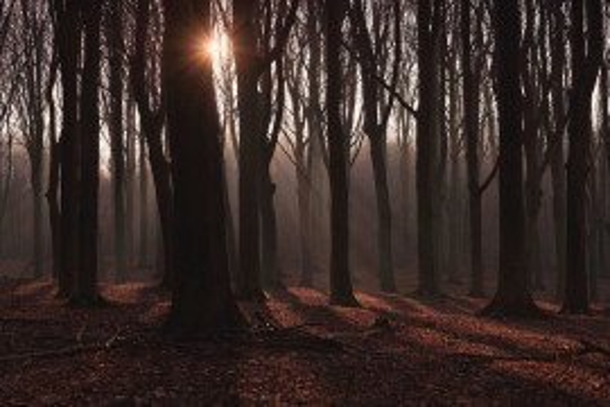 Forest Economic Data: Mercer County