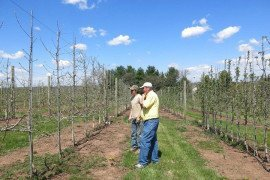 Brett Saddington talking with Dr Rob Crassweller about ideal tree fruit density.