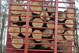 Timber Prices: 10 Year Trends for Northeast Pennsylvania