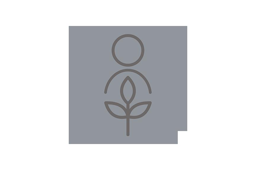 Recolección de una muestra para análisis de suelo. Foto cortesiá de Penn State Extension