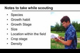 Integrated Weed Management: Weed Scouting for Vegetable Production