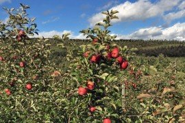 Orchard Management: Site Planning and Preparation