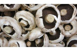Impact of the Mushroom Industry on the Environment