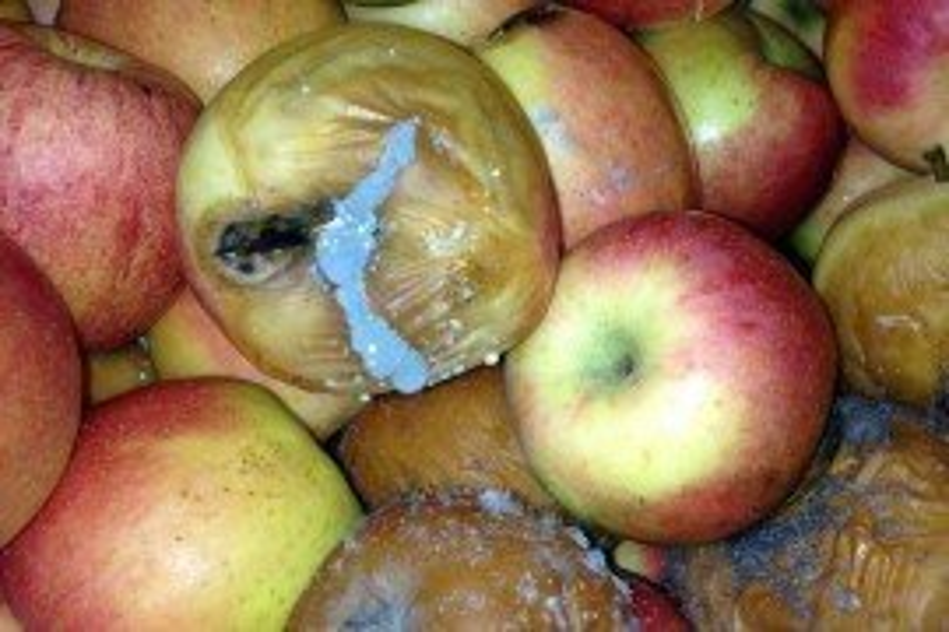 Tree Fruit Diseases - Postharvest
