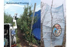 Automation of Dormant Pruning