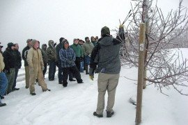 Pruning just before a cold snap increases susceptibility to injury.