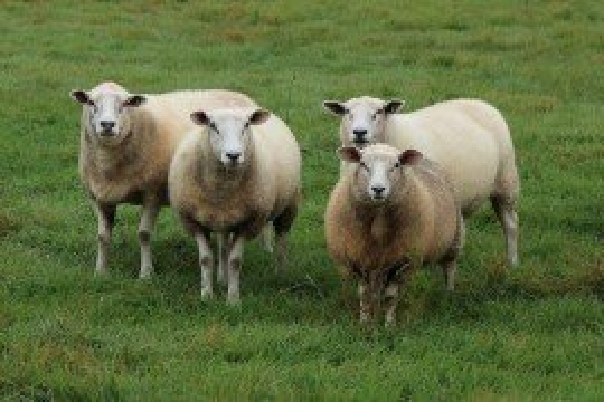 Sheep Records: The Key to Profitability