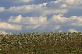 Organic Orchard Production in the Mid-Atlantic Region