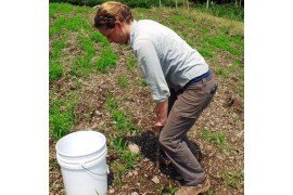 Soil testing throughout the project helps determine if any soil amendments are needed. Photo: Kristi Kraft