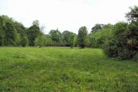Fall Management for Pastures: Renovate or Restore?
