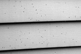 Artillery Fungus Black Spots on Siding and Vehicles