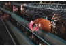 Creating a Farm Plan for Highly Pathogenic Avian Influenza