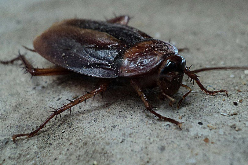 Common Urban Pests: Identification, Prevention, and Control