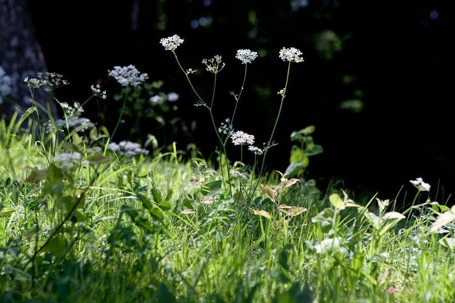 Weed Ecology, Biology, and Identification