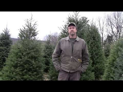 Christmas Tree Operation