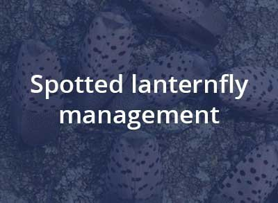 Spotted Lanternfly Management